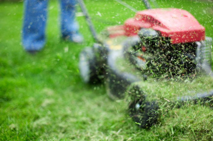 Scientists discover shortcut for turning grass into plane fuel.