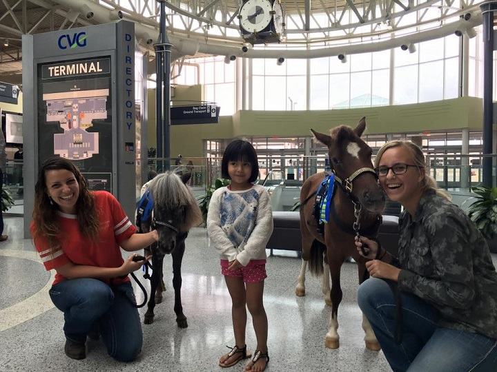 Mini horses help calm nervous travelers at airport