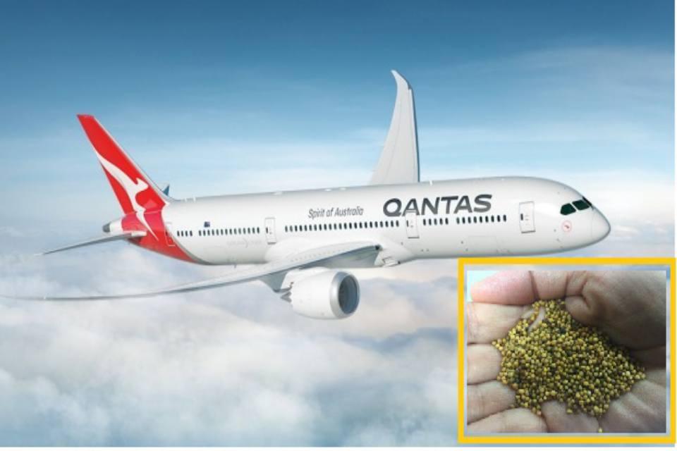 From farm to flight: Qantas to operate world's first us-australia biofuel flight